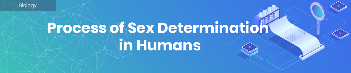 The Process of Sex Determination in Humans